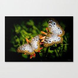 White Peacock Butterflies Canvas Print