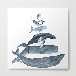 whale gatherin Metal Print