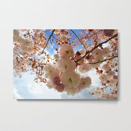 Cherry Blossoms spring Metal Print