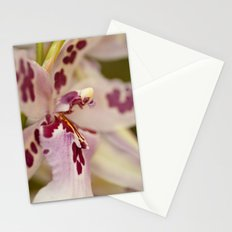Cambria 5-8022 Stationery Cards