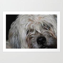 Puppy Face Art Print