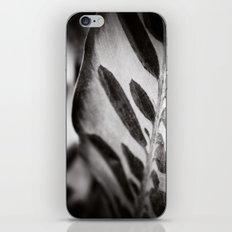 Secret Garden ~ No.6 iPhone & iPod Skin