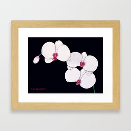 Trois Orchids and a Bud Framed Art Print