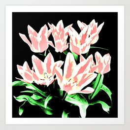 Rose White Tulpis on black Background Clipart Art Print