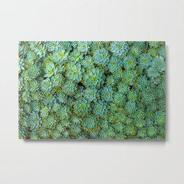 Amazing Green Color Succulents Leaf Echeveria Plant Nature Botanical Art Metal Print