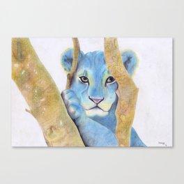 Lion (Cassius) Canvas Print