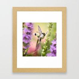 Hummingbird Whimsy Framed Art Print