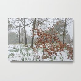 Foggy Oaks forest. Snowing Into The Woods Metal Print