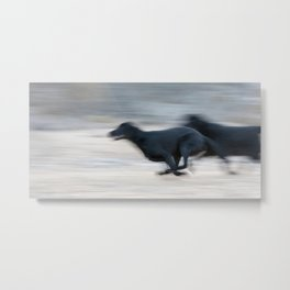 Flat Out Labradors Metal Print