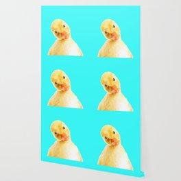 Duckling Portrait Turquoise Background Wallpaper