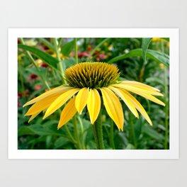 Yellow Echinacea/Coneflower Sideview Art Print
