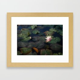 No Mud, No Lotus Framed Art Print