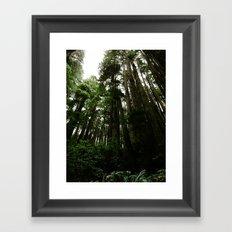 Redwoods #1 Framed Art Print