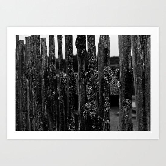 Weathered Pickets Art Print