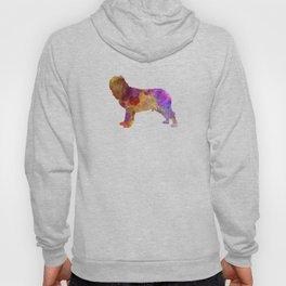 Napolitan Mastiff in watercolor Hoody