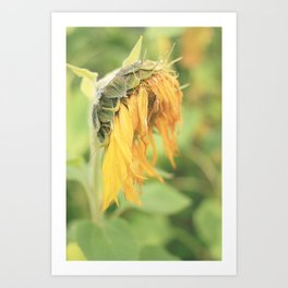 Wilting Art Print