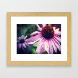 Purple Cone flower Framed Art Print