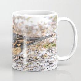 Male Varied Thrush Amid the Snow and Seed Coffee Mug