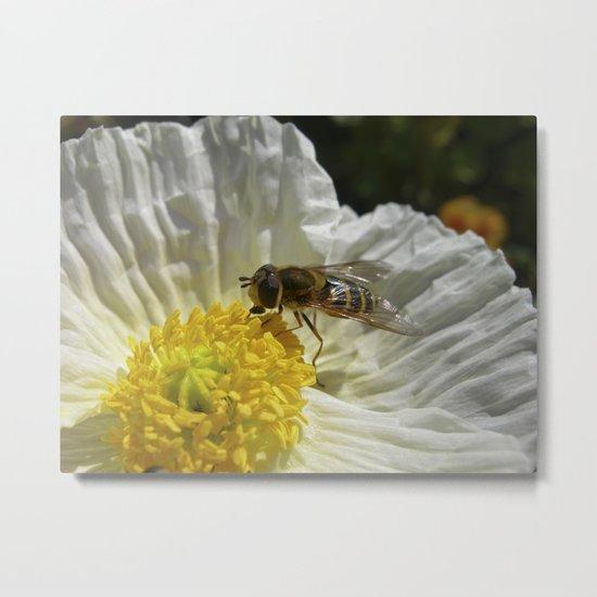 flower fly macro VI Metal Print
