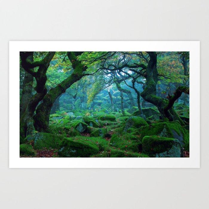 Enchanted forest mood Art Print