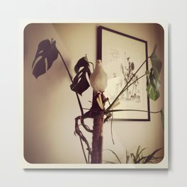 At home with dove Metal Print