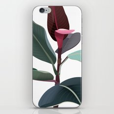 Ficus Elastica iPhone & iPod Skin