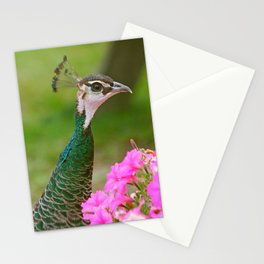 Peahen Stationery Cards