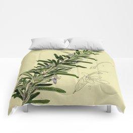 Botanical Rosemary Comforters