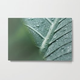 Elephant Ear Leaf still life, fine art print, high quality macro, water drops photography Metal Print
