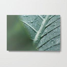 Leaf still life, fine art, high quality, macro photography, nature photo Metal Print
