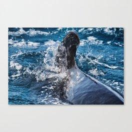 Long-Finned Pilot Whale, Calderon comun (Globicephala melas) Canvas Print