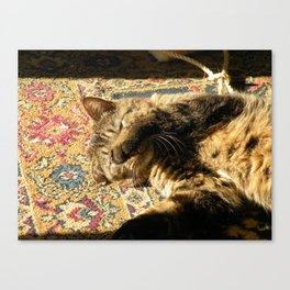 Why you wake me up? Canvas Print