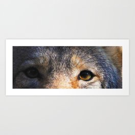 Coyote Eyes II Art Print