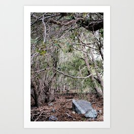 Deep In The Trees Art Print