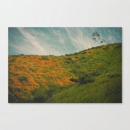 California Poppies 017 Canvas Print
