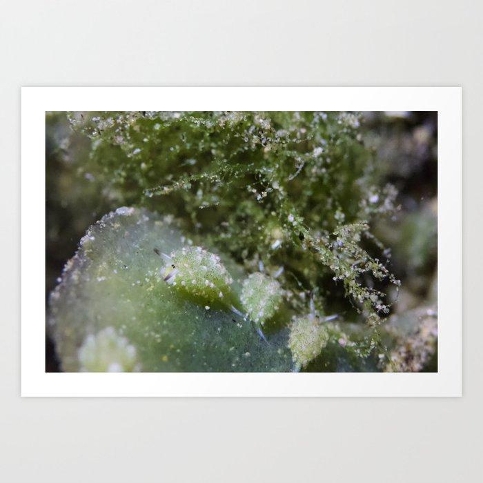 Shaun the sheep nudibranch herd Kunstdrucke