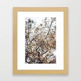 Fading autumn Framed Art Print