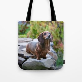 Autumn Dachshund Tote Bag