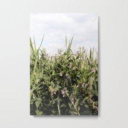 Field of Comfrey Metal Print