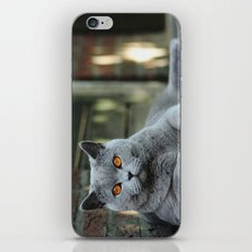Diesel the cat ! iPhone & iPod Skin