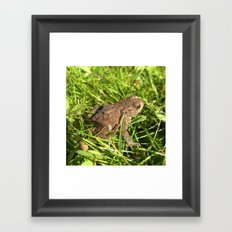 tree frog macro IV Framed Art Print