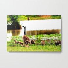 Canada Goose and Goslings Metal Print