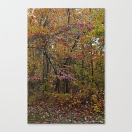 Rustic Rescue Canvas Print