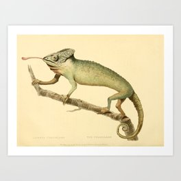 """""""The Chameleon"""" from the Leverian Collection, 1790s Art Print"""