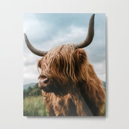 Scottish Highland Cattle - Animal Photography Metal Print