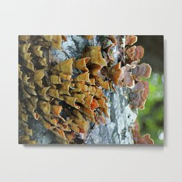 Color in the Trees Metal Print