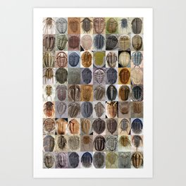 Trilobite Montage Art Print