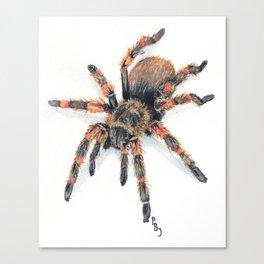 Fido-Hawaiian Cane Spider Canvas Print
