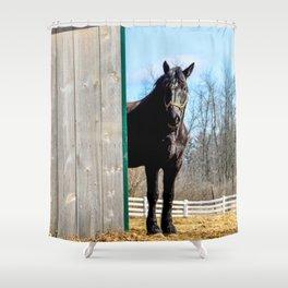 Percheron Horse by Teresa Thompson Shower Curtain