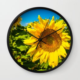 Here Comes the Sun - Giant Sunflower on Sunny Day in Kansas Wall Clock